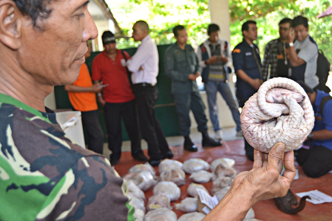 W. Kalimantan authorities foil attempt to smuggle scaly anteaters to China