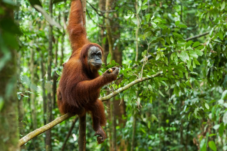 Fantastic animals of Indonesia and where to find them