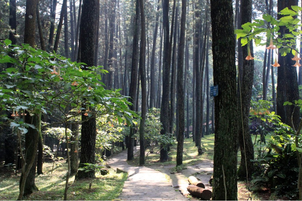 Illegal cafes in Bandung forest park finally closed