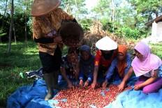 Women sort coffee cherries at the Assinan Plantation of PT Perkebunan Negara IX in Semarang regency. JP/ Suherdjoko