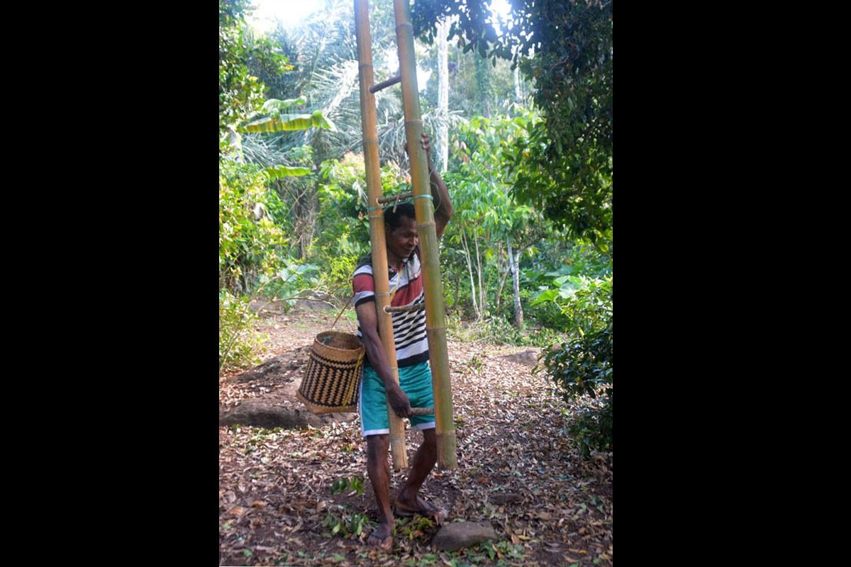 A farmer from Kampung Waekolong, Ranakolong village, Kota Komba district, East Manggarai, prepares to pick cloves at his plantation in Nggoro Nggobo on Sept.9. JP/Markus Makur