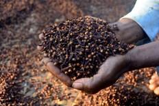 A farmer shows dried cloves that he will sell at a market in East Manggarai. JP/Markus Makur