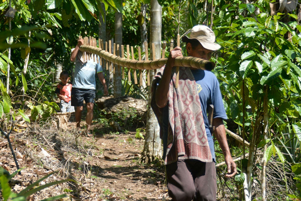 Farmers from Ranakolong village, Kota Komba, East Manggarai, carry a bamboo ladder that will be used to pick cloves. JP/Markus Makur