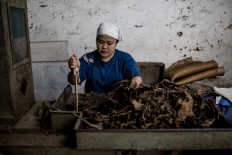 A worker cleans chopped tobacco leaves at the Rizona Baru cigar factory in Temanggung, Central Java. The factory was built in 1910 by Oo Tjong Han, a Chinese immigrant who lived in Temanggung. Every day the factory can produce 3,000 cigars, which are manually crafted by the skilled hands of the workers, who are mostly women. JP/Agung Parameswara