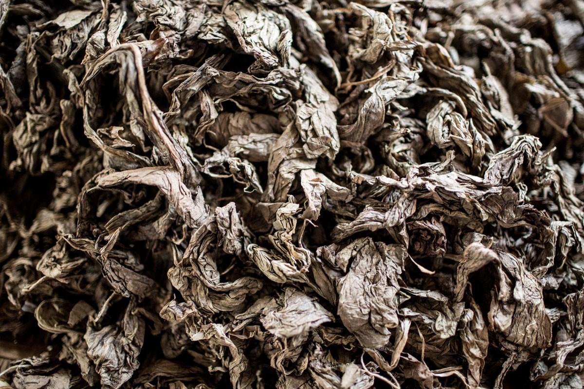 Dry tobacco leaves at the Rizona Baru cigar factory in Temanggung, Central Java. JP/Agung Parameswara