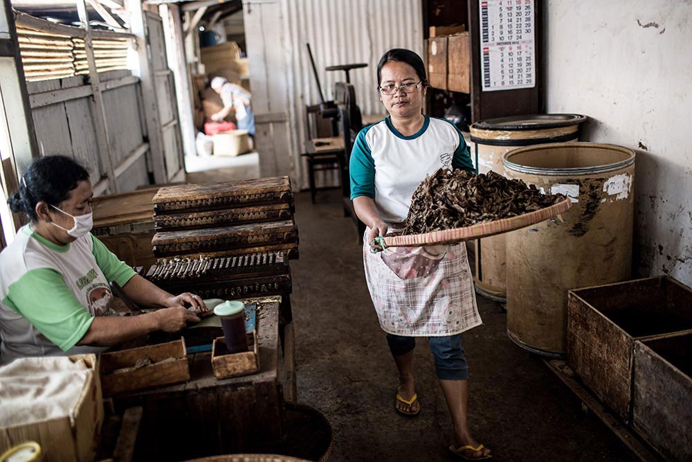 A woman carries chopped tobacco leaves at the Rizona Baru cigar factory in Temanggung, Central Java, while another worker rolls cigars. JP/Agung Parameswara