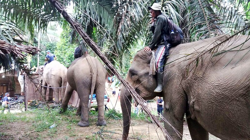 Elephants suffering from malnutrition sent to sanctuary