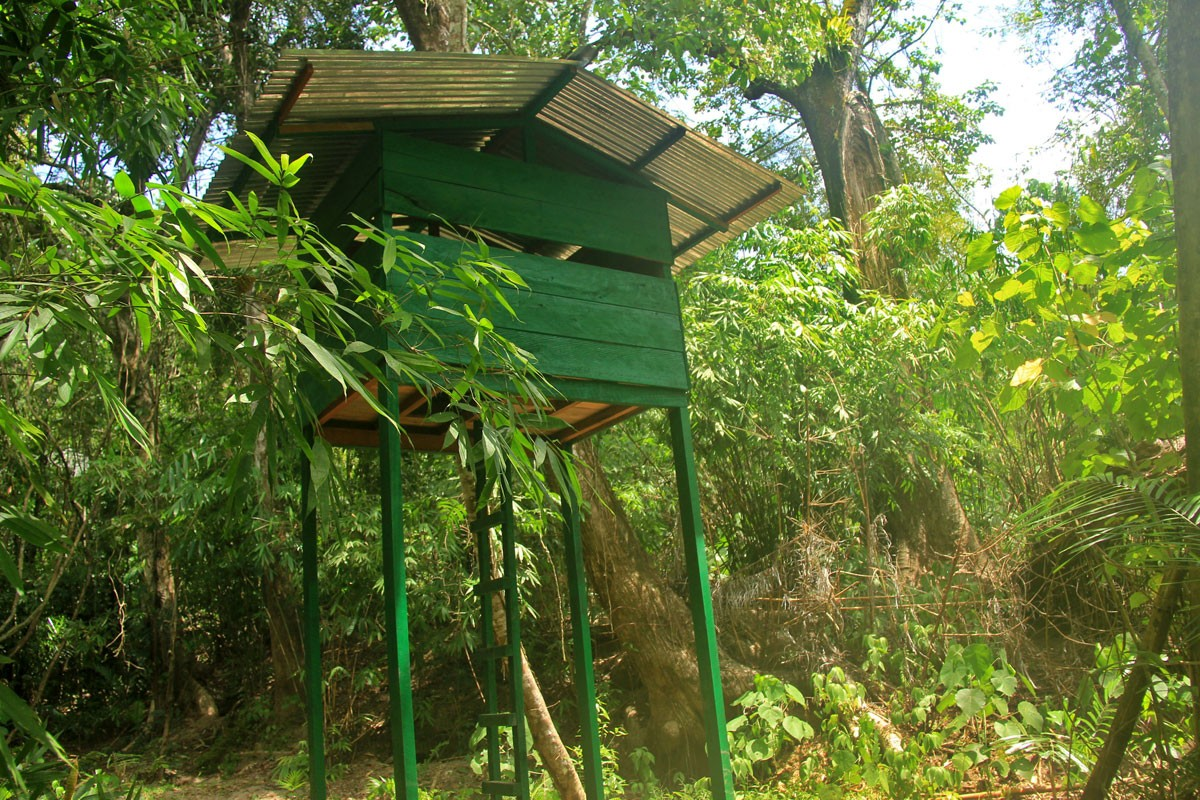 An observation tower stands inside the Hungayono conservation camp. The bird is known as a shy animal that is difficult to be documented at the wildlife. JP/Syamsul Huda M.Suhari