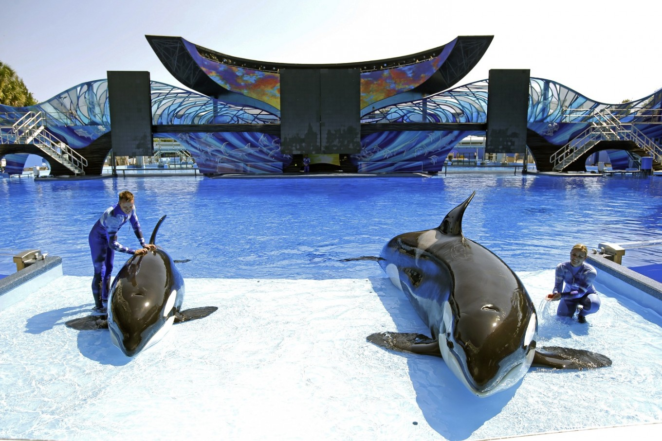 1st SeaWorld park without orcas opening in Abu Dhabi in 2022