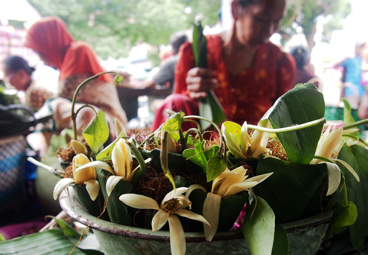 Vendors sell quid usually consisting of betel leaf, areca nut, and lime – often with other ingredients such as gambier and tobacco. In a tradition called Miyos Gongso, people chew betel as they listen to a musical performance played using Sekati, a set of gamelan or Javanese musical instruments belonging to the Surakarta palace. JP/Ganug Nugroho Adi