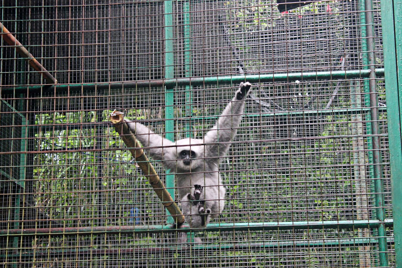 Conservationists call for immediate protection of owa Jawa