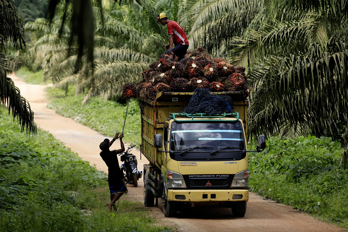 Indonesia not keeping silent about EU's palm oil discrimination, says Jokowi