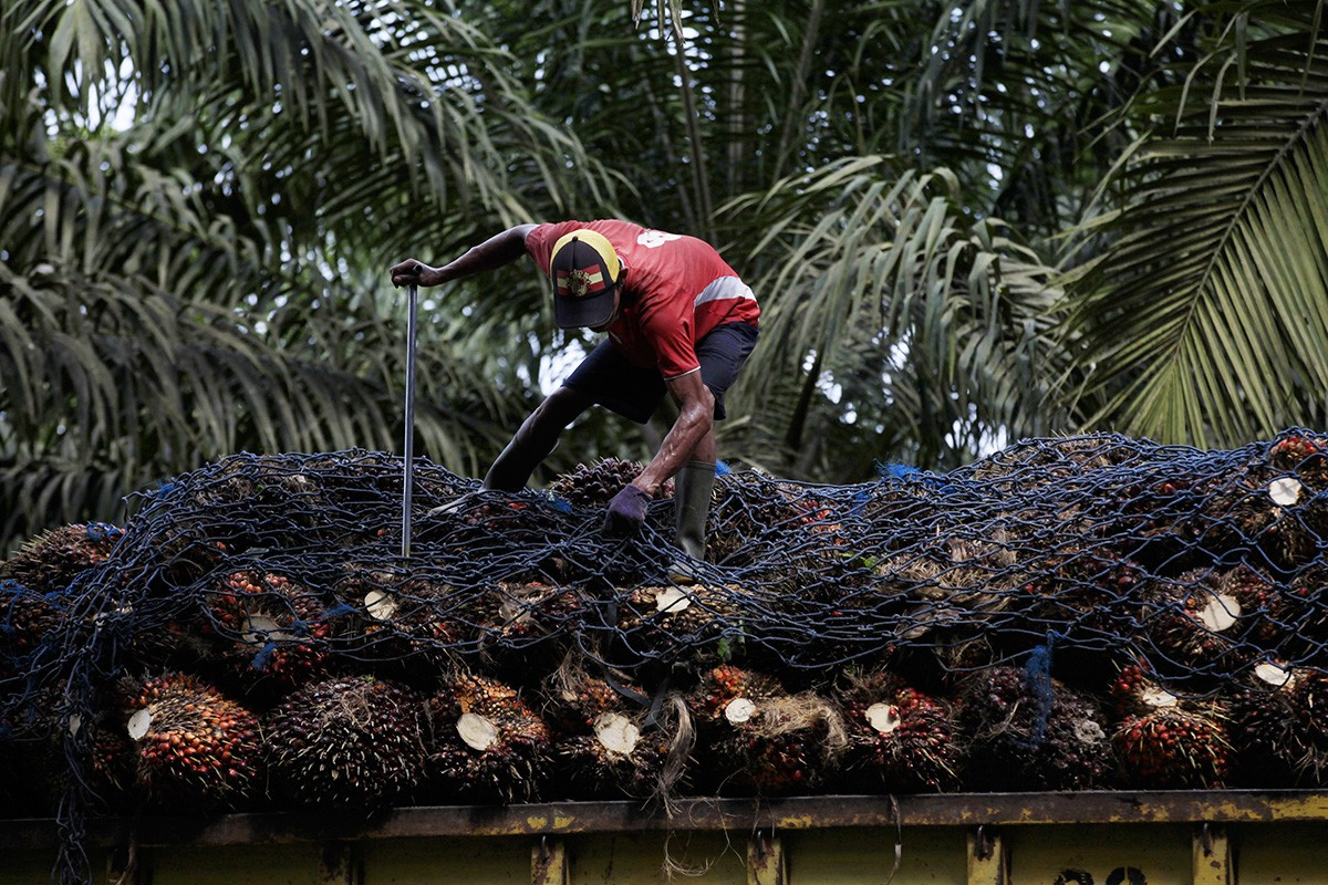 Palm oil producers eye domestic market amid challenges