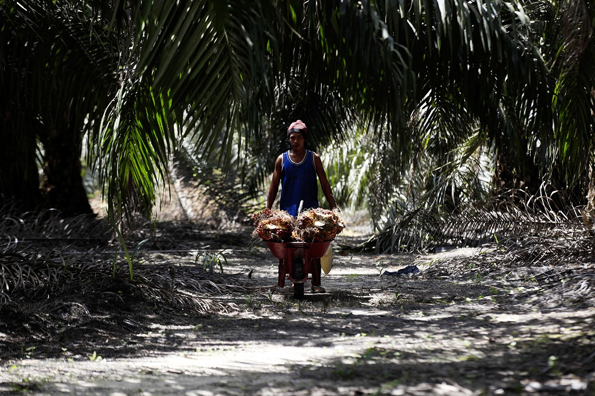 Insight: Fair trade for palm oil, please!