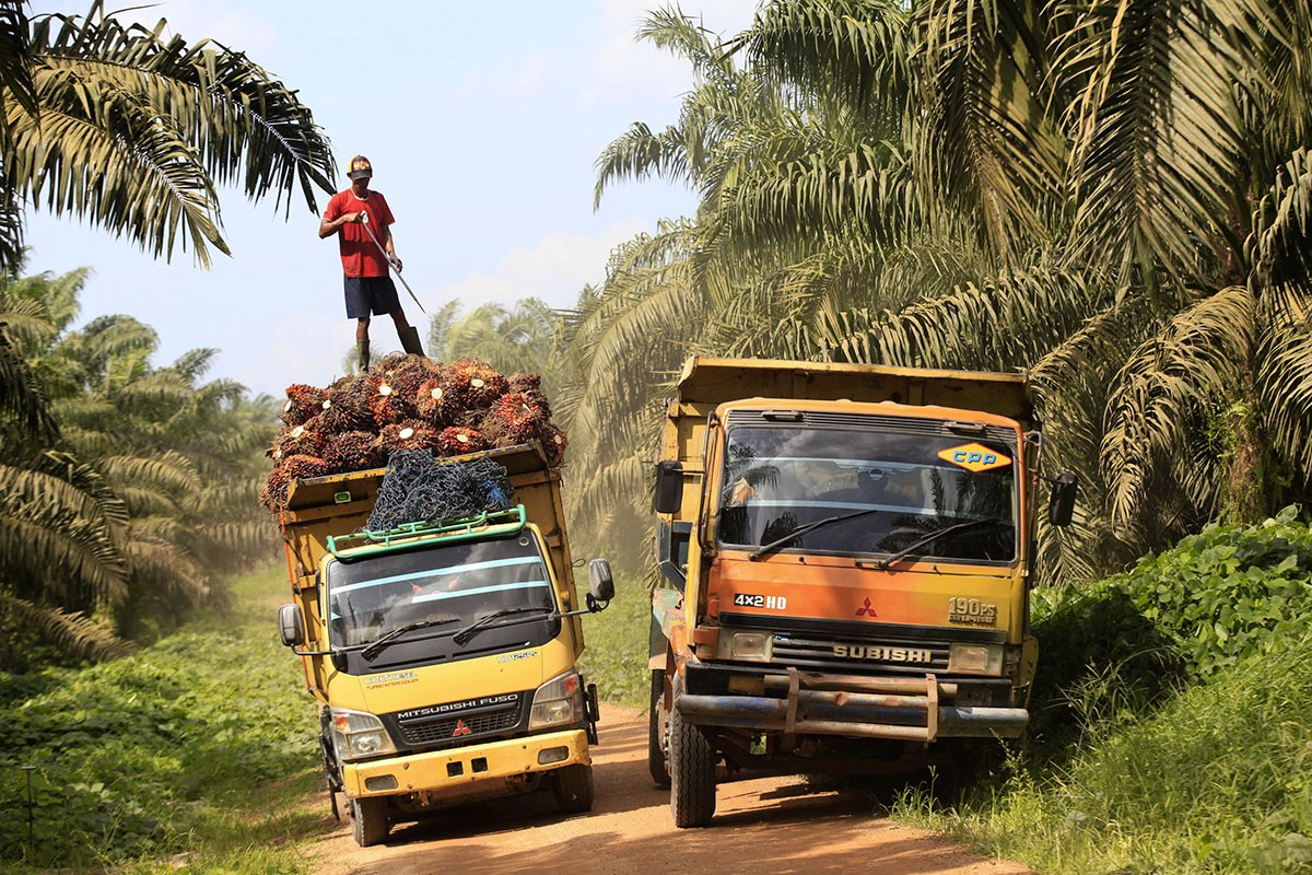 EDITORIAL: Facing the EU palm oil policy