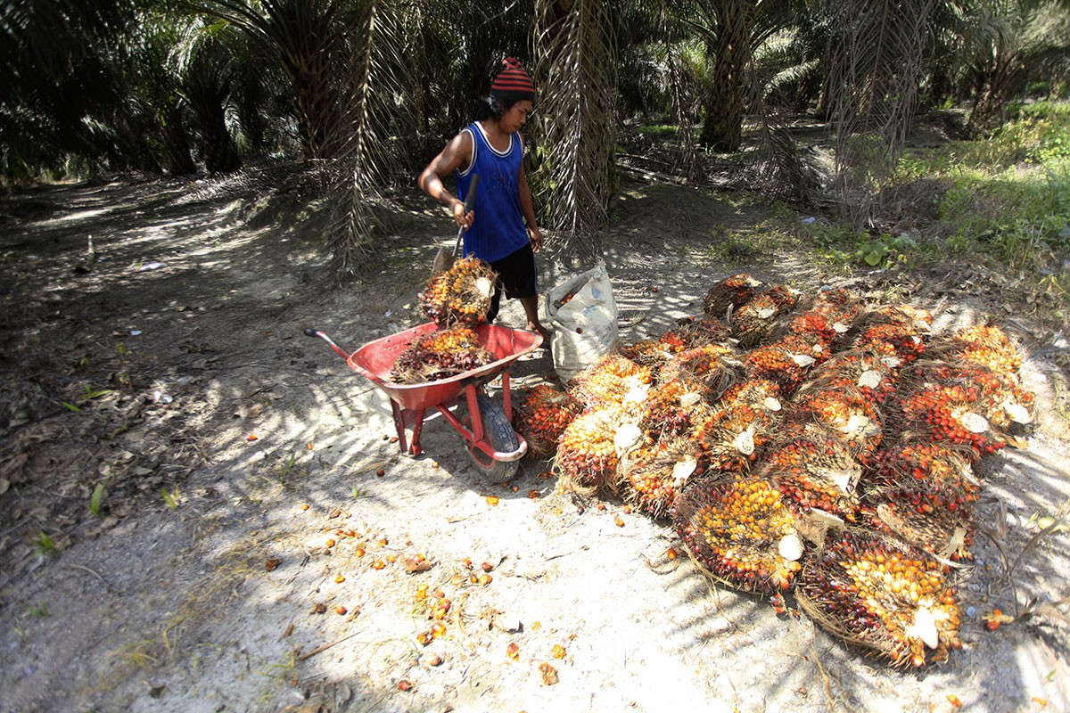 Indonesia raises palm oil issue at ASEAN-EU meeting