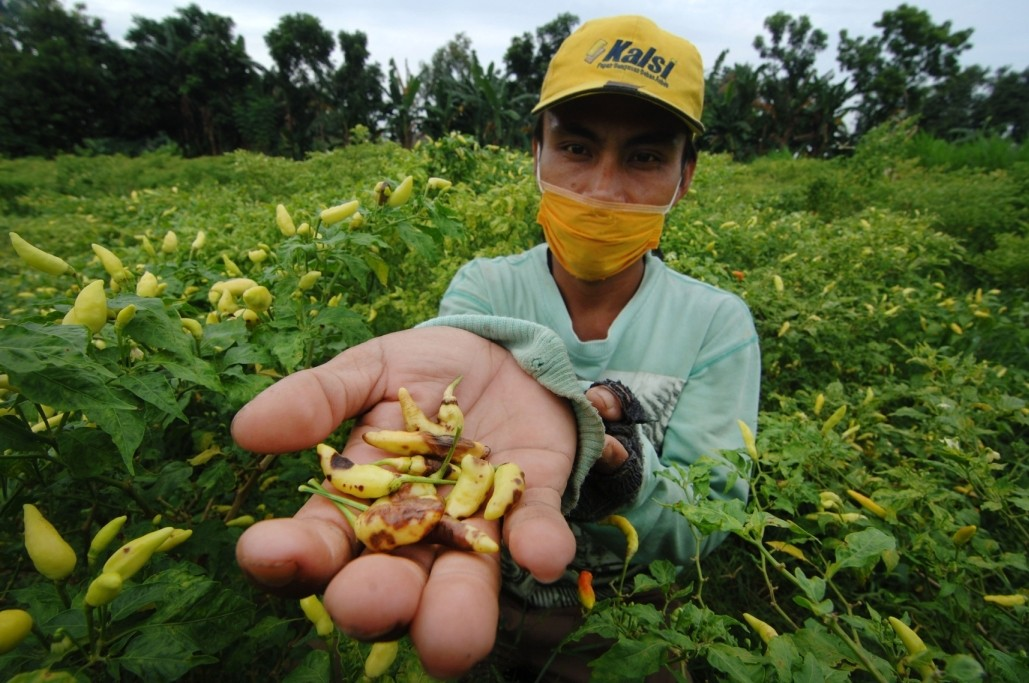 Climate justice for smallholder farmers