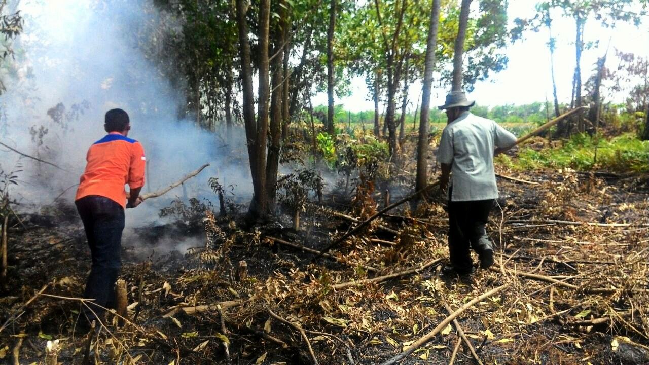 Indonesian government remains vigilant on forest fires