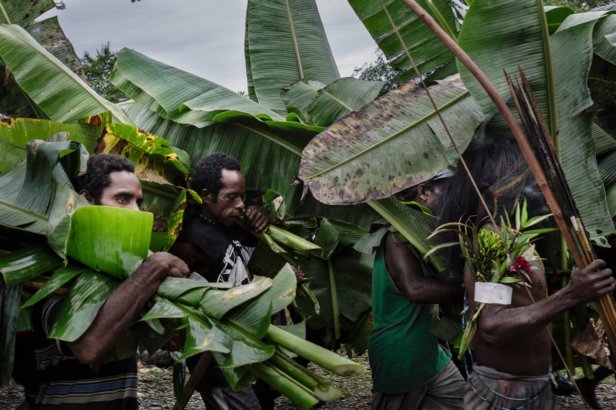 Villagers collect banana leaves for the bed of leaves in the hot stone cooking process or to wrap food. Besides banana leaves, villagers also use grass and other leaves. JP/ Vembri Waluyas