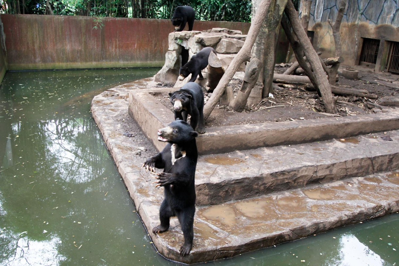 Zoo defends conditions following video of sun bears begging for food
