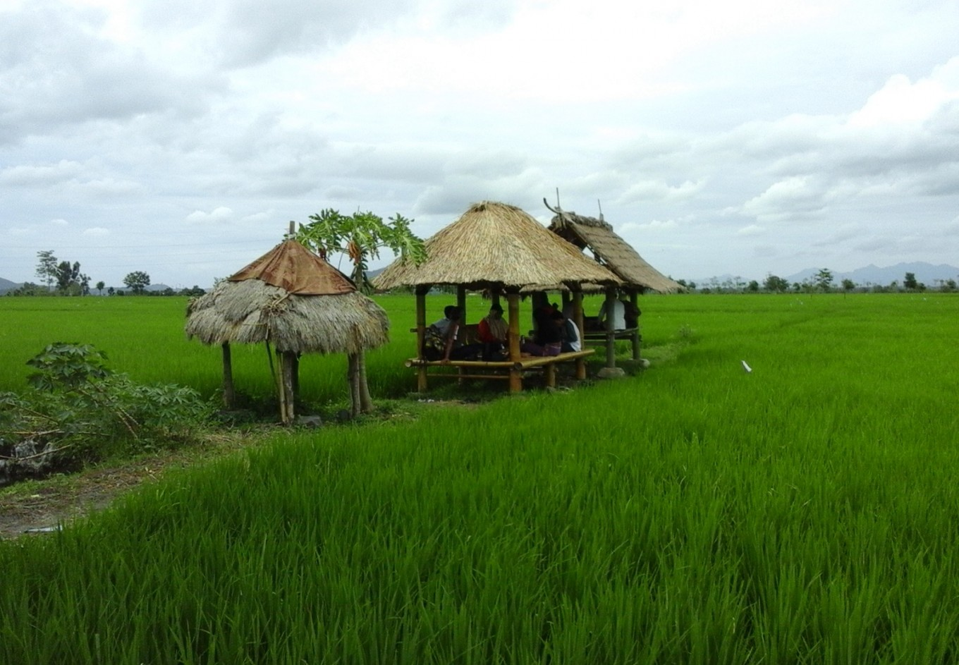 100 hectares of paddy to be planted in Kerinci