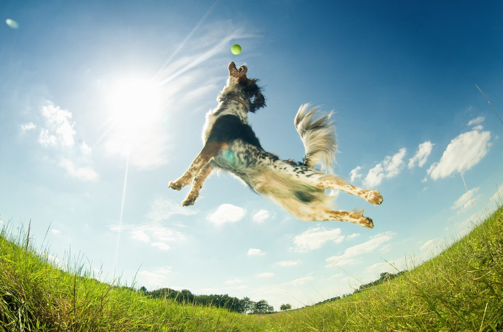 Want to live longer? Get a dog