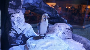 Penguin restaurant puts spotlight on zoo controversy