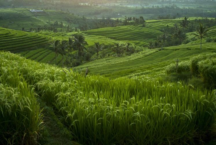 The beautiful Jatiluwih rice terraces in Tabanan, Bali, Indonesia.