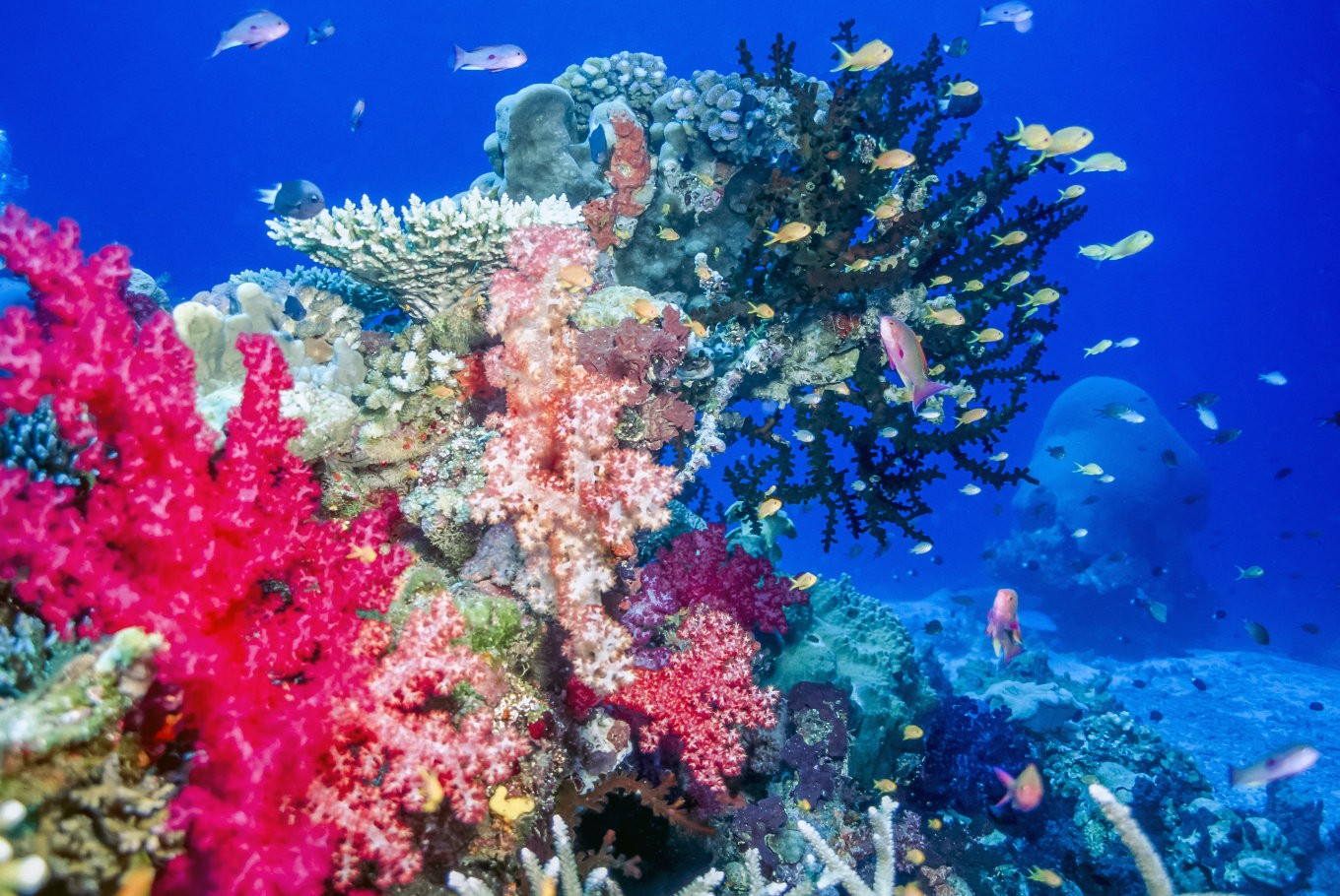 study stopping global warming only way to save coral reefs study stopping global warming only way to save coral reefs