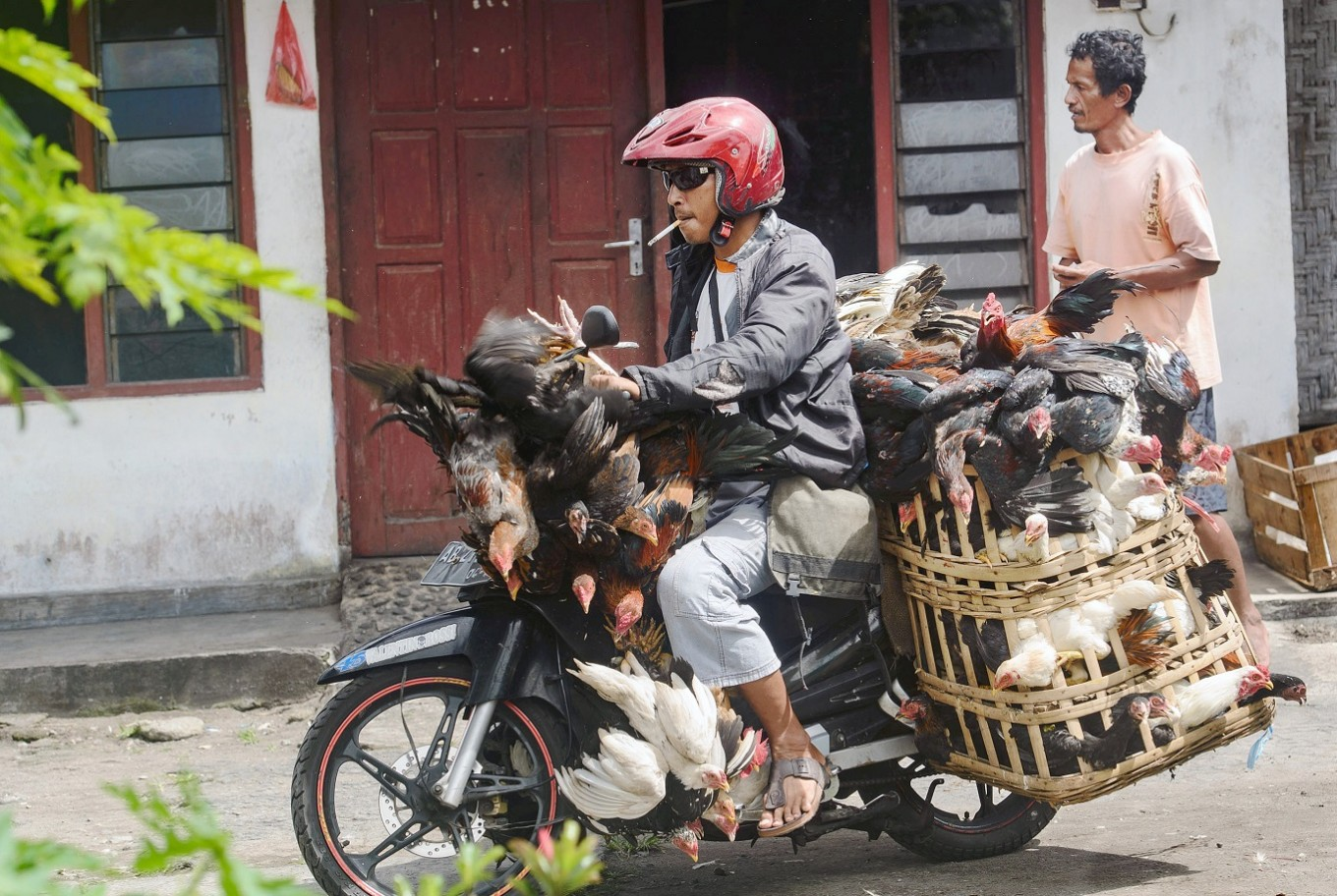 For sale: A man takes his chickens to the market.