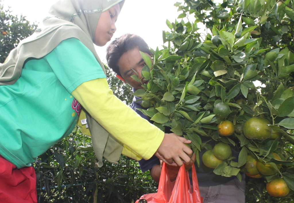 Foreign oranges put Indonesia's own in tight squeeze