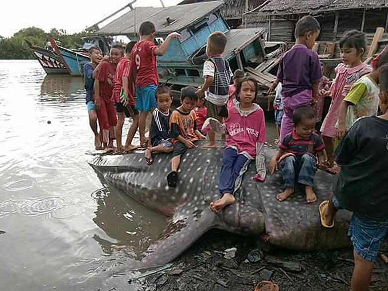 East Nusa Tenggara fishermen rescue stranded whale