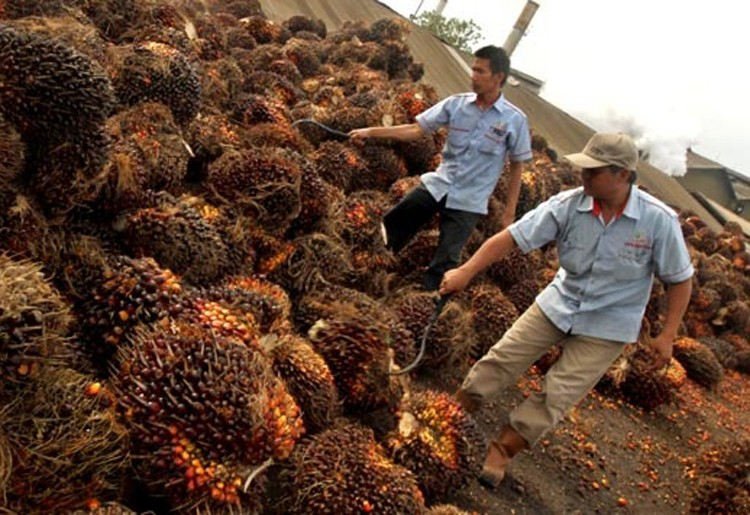 Indonesia seeks UNDP support for ISPO palm oil standard