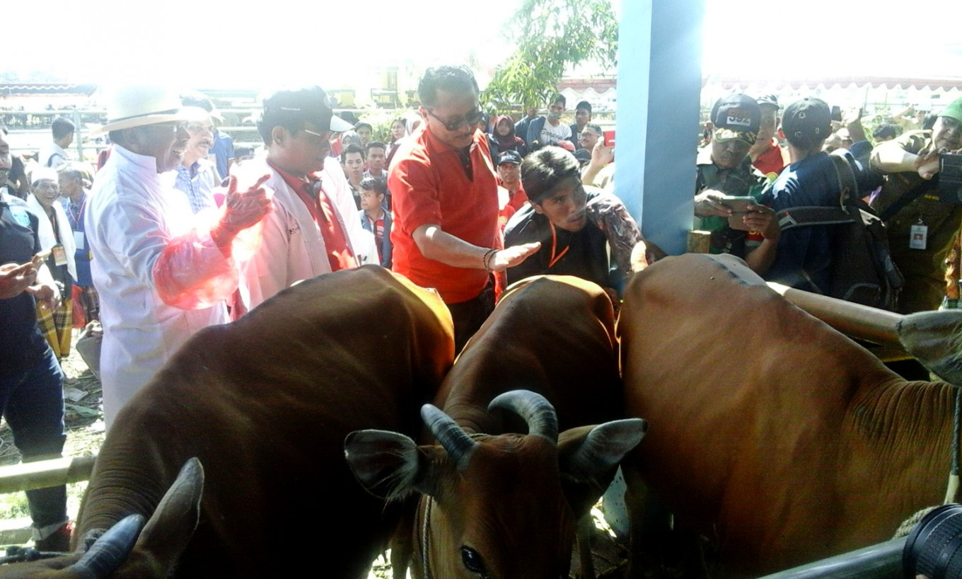 Over Rp 1t earmarked to boost livestock numbers via artifical insemination