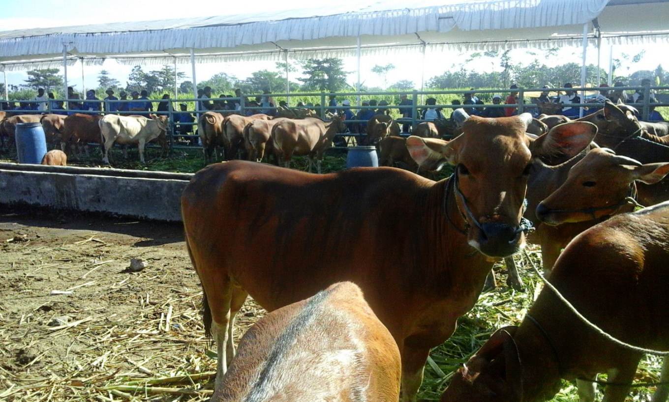 Increased cattle population behind decline in beef imports, says ministry