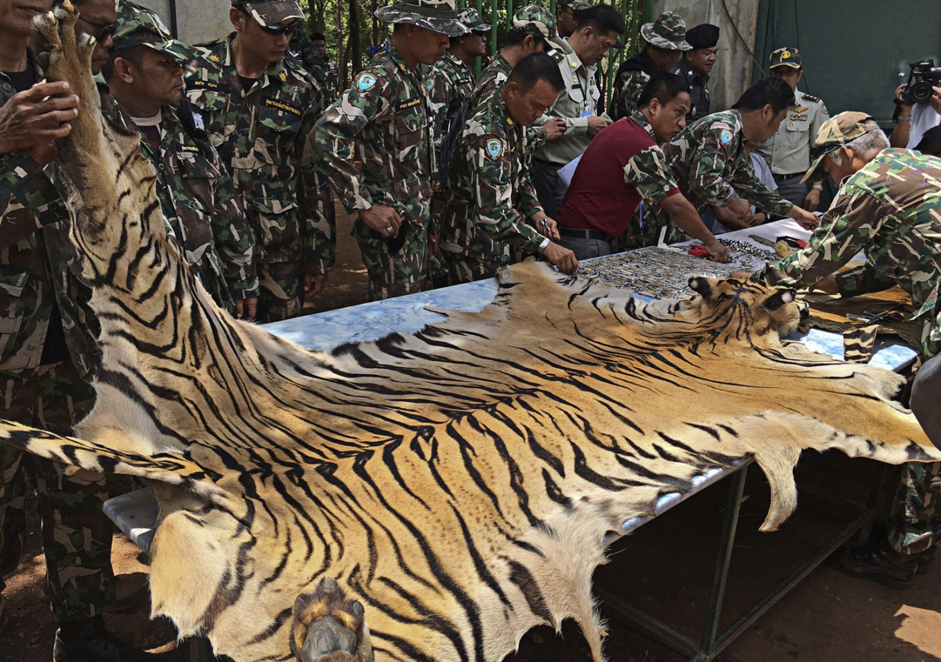 Interpol: $5.1 million of illegal wildlife and timber seized