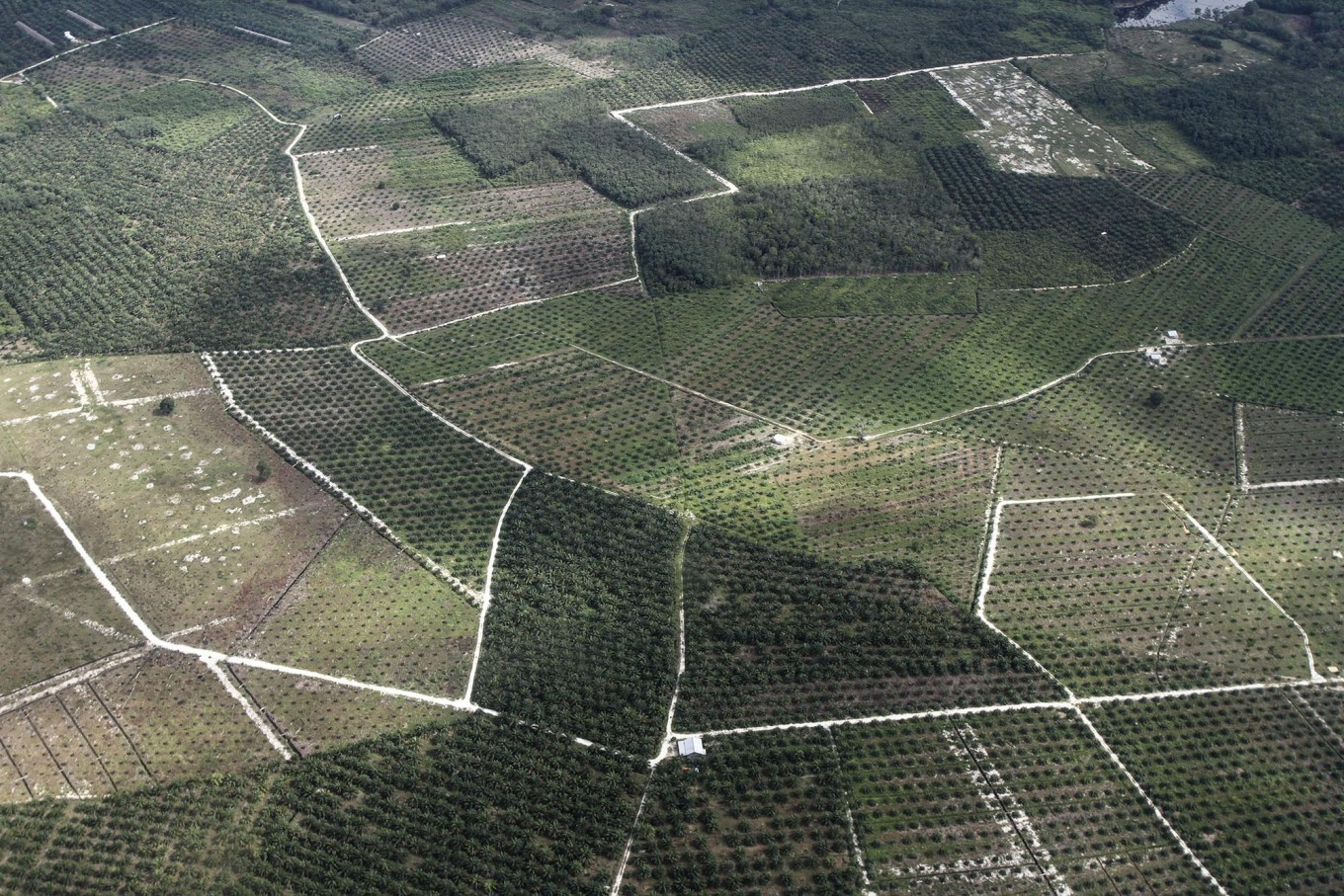 Palm oil environmental issues stressed amid negative campaign fears