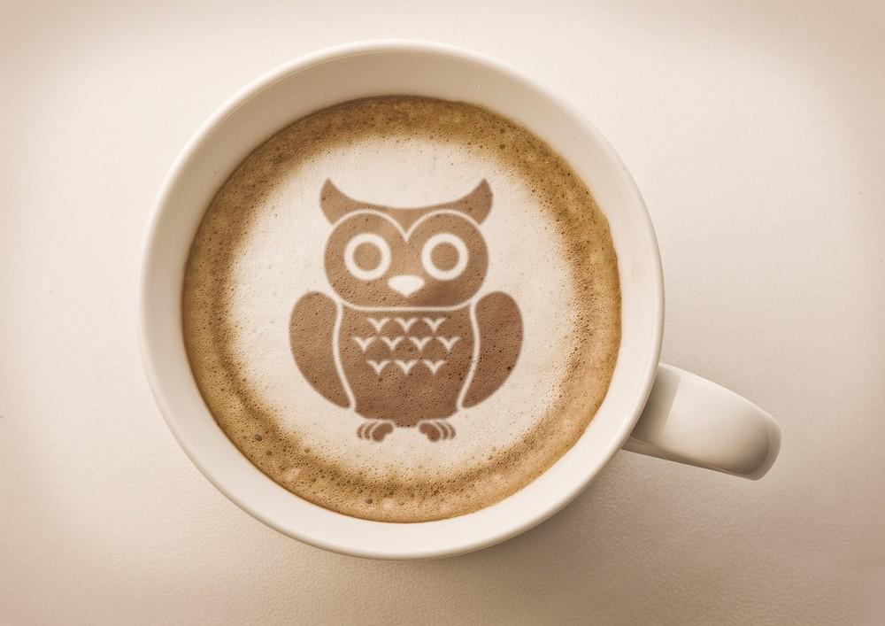 Japan's popular owl cafes under scrutiny