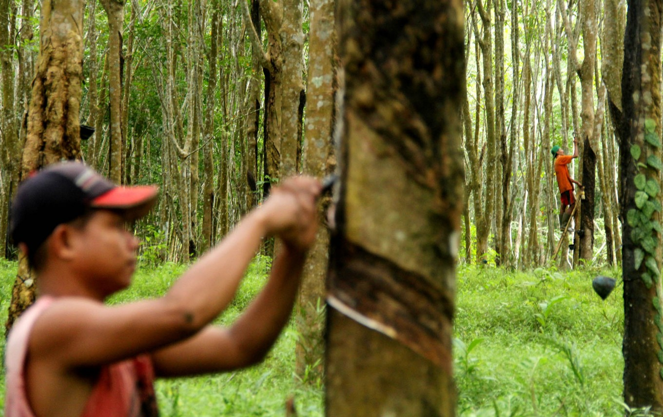 Plant disease threatens thousands of hectares of rubber plantations