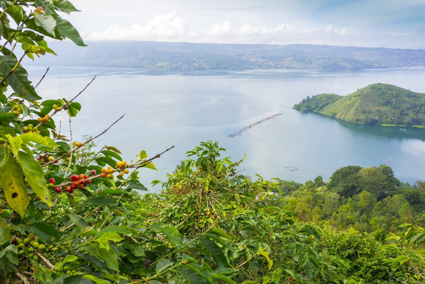 North Sumatra to host coffee festival in Lake Toba