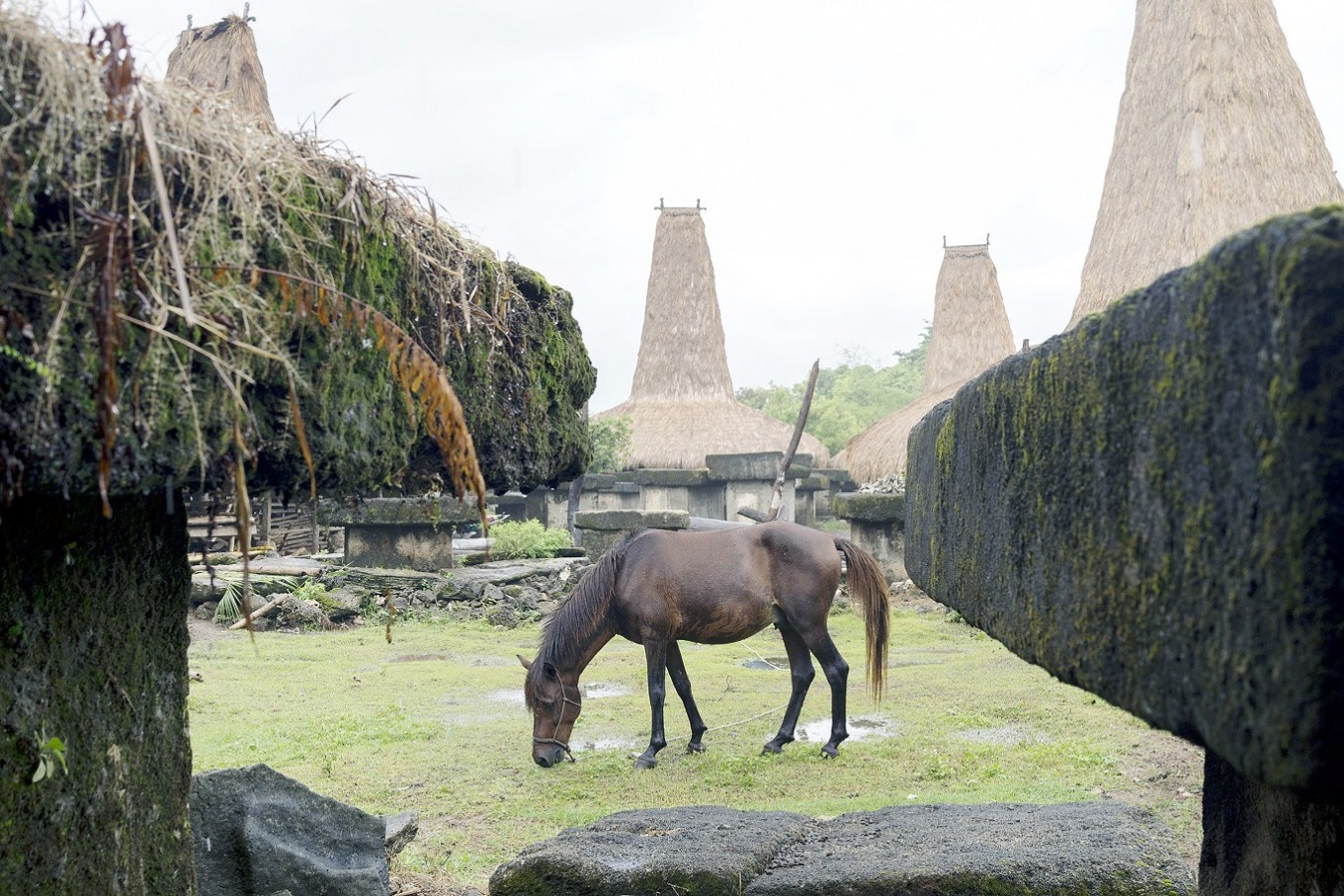 Lone time: A horse is seen at the Waruwora customary village in Sumba, East Nusa Tenggara.
