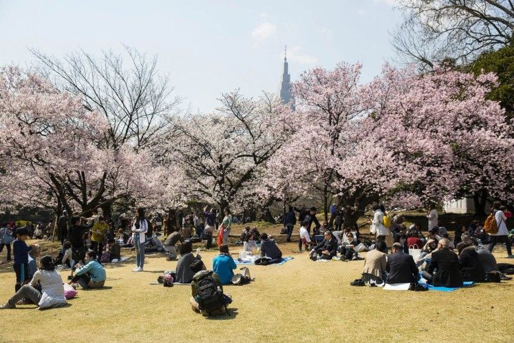 Japan's cherry blossom season may arrive early this year