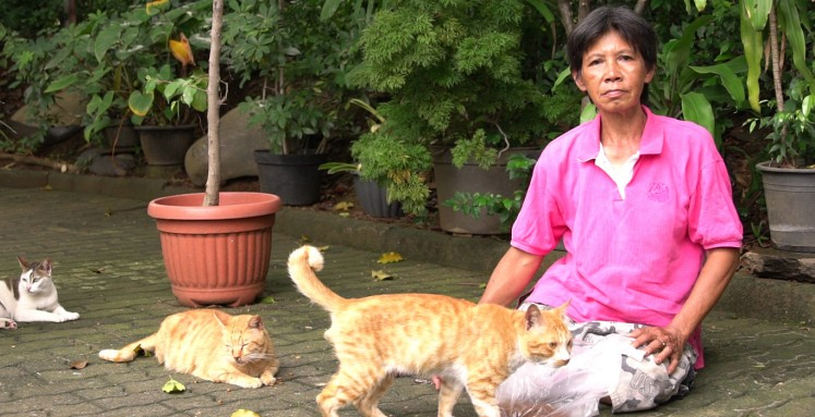 Jobless woman in South Jakarta helps?cats?despite limitations