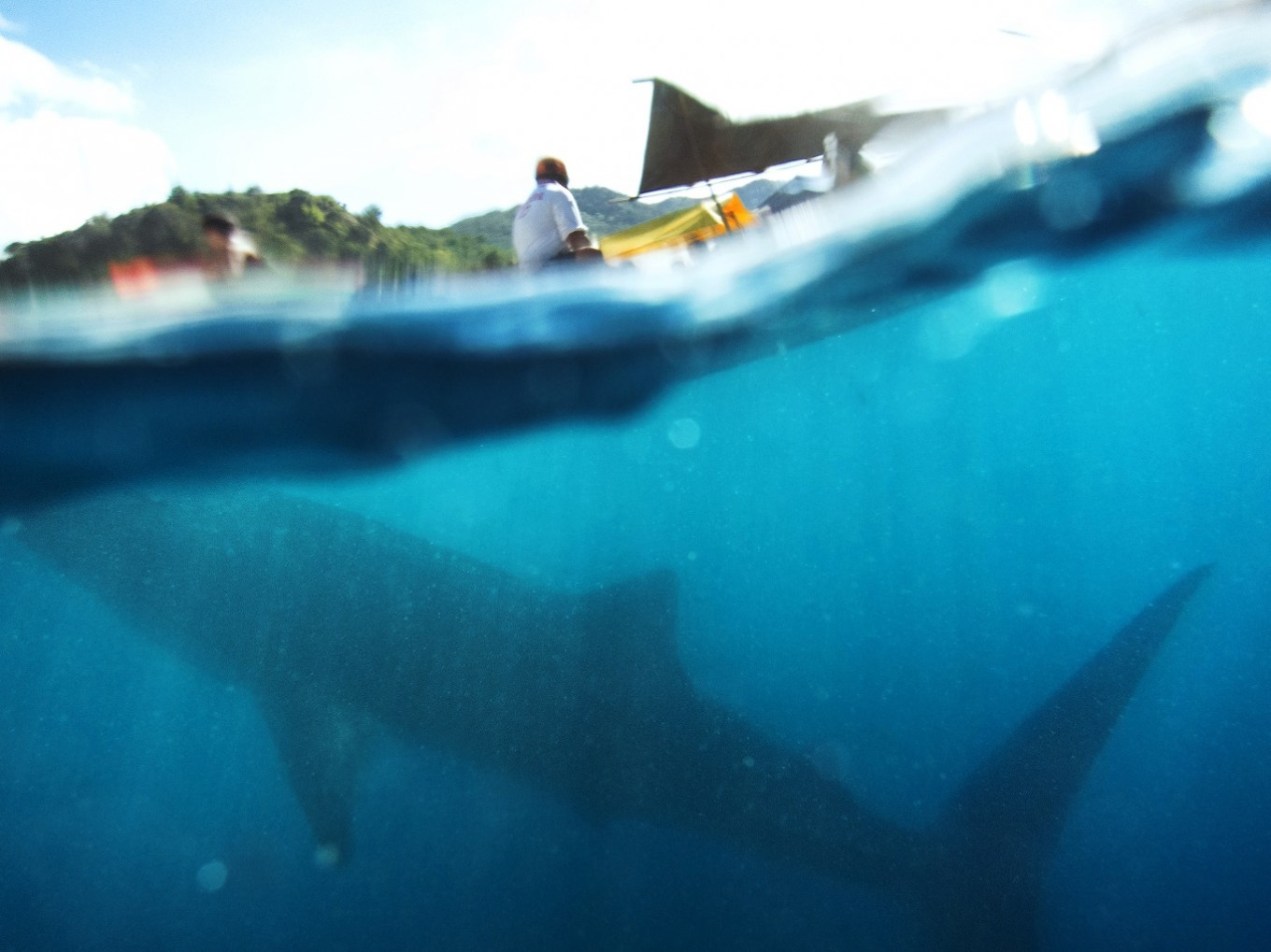 A whale shark swimming under a fisherman's boat.