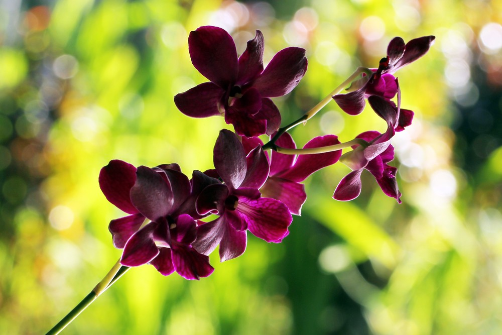 LIPI to publish postage stamps featuring orchids from across Indonesia