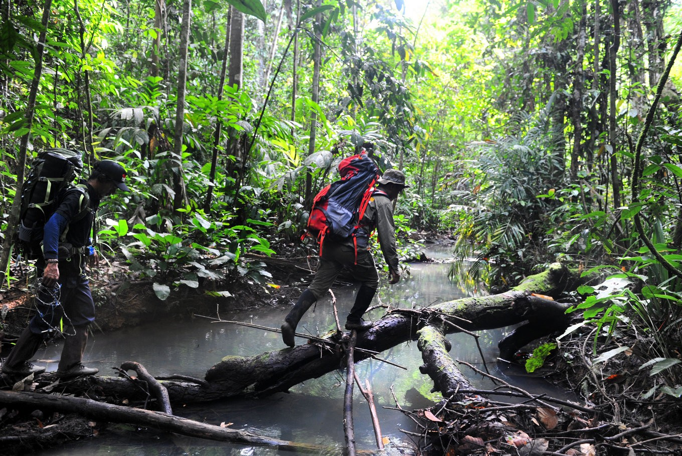 Leuser forest in danger