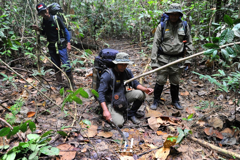 Tim FKL sedang merusak jerat yang dipasang pemburu. Foto: AFP/Chaideer Mahyuddin