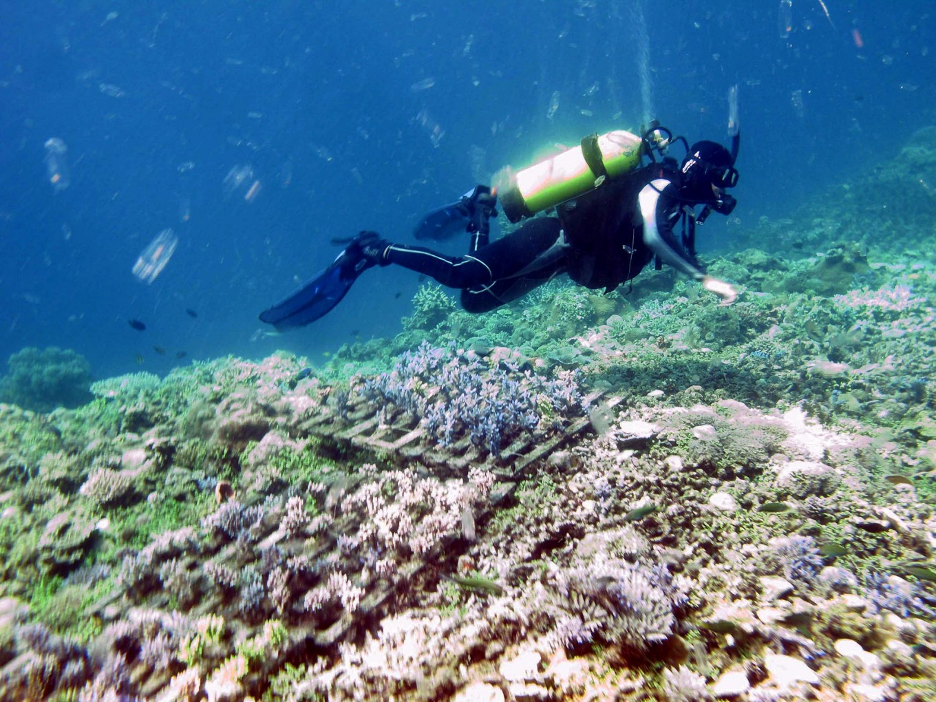 A diver checks the condition of the stemmed reefs. JP/Suherdjoko