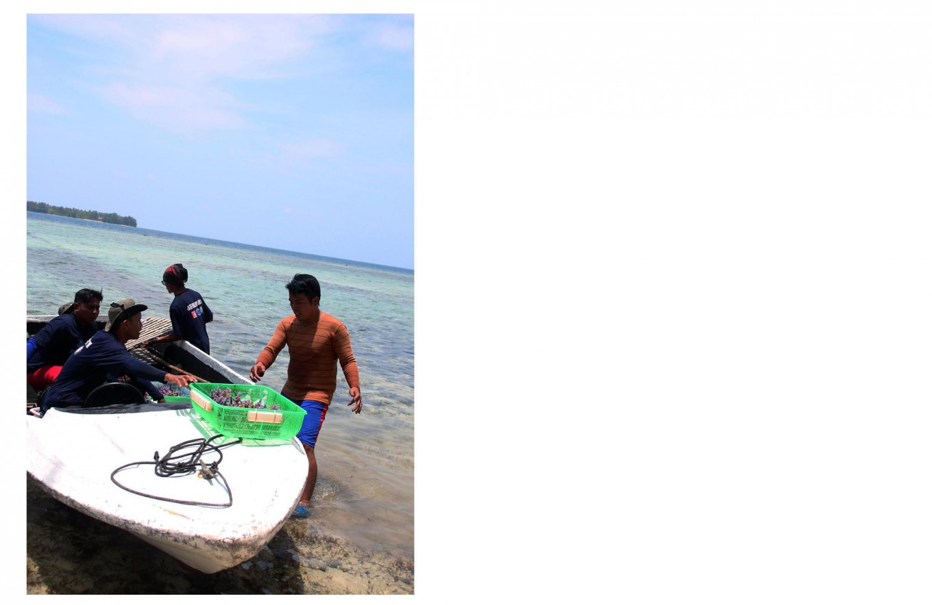Workers board a small boat to transport the coral reefs. JP/Suherdjoko