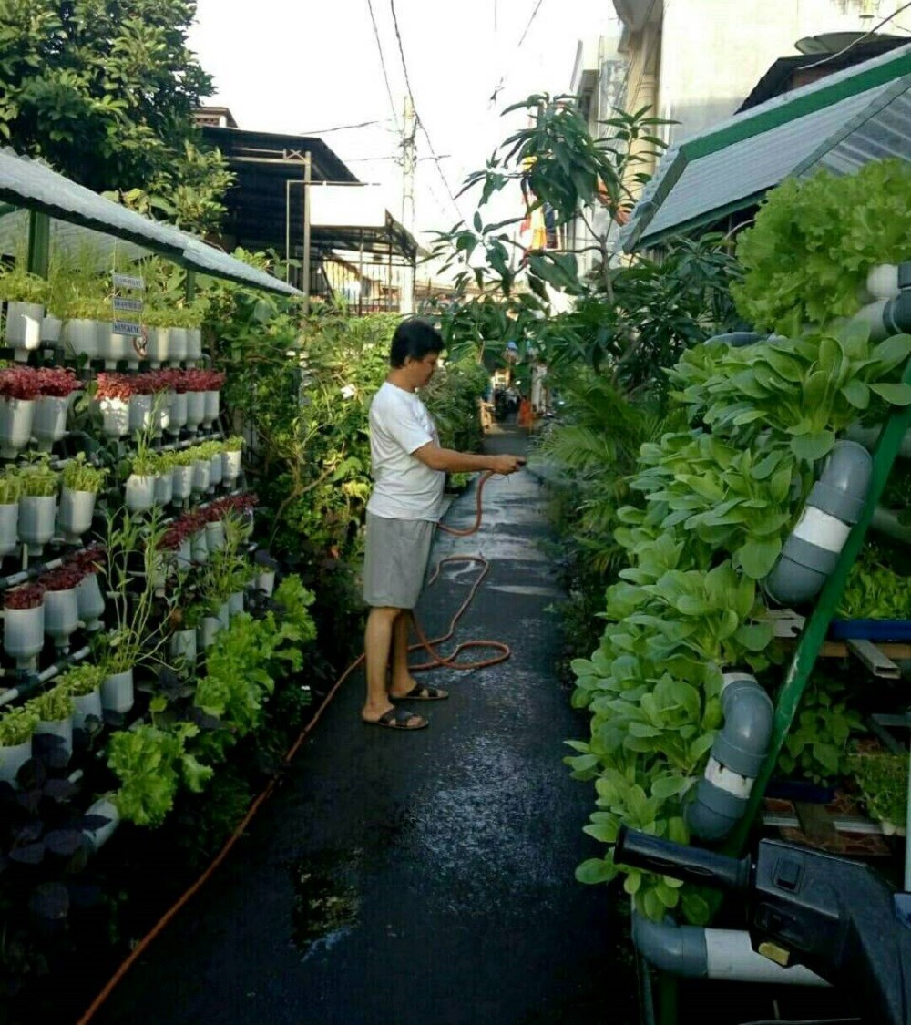 jakartans to see more urban farming city the jakarta post. Black Bedroom Furniture Sets. Home Design Ideas